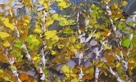 Autumn North Wales 40x40cm